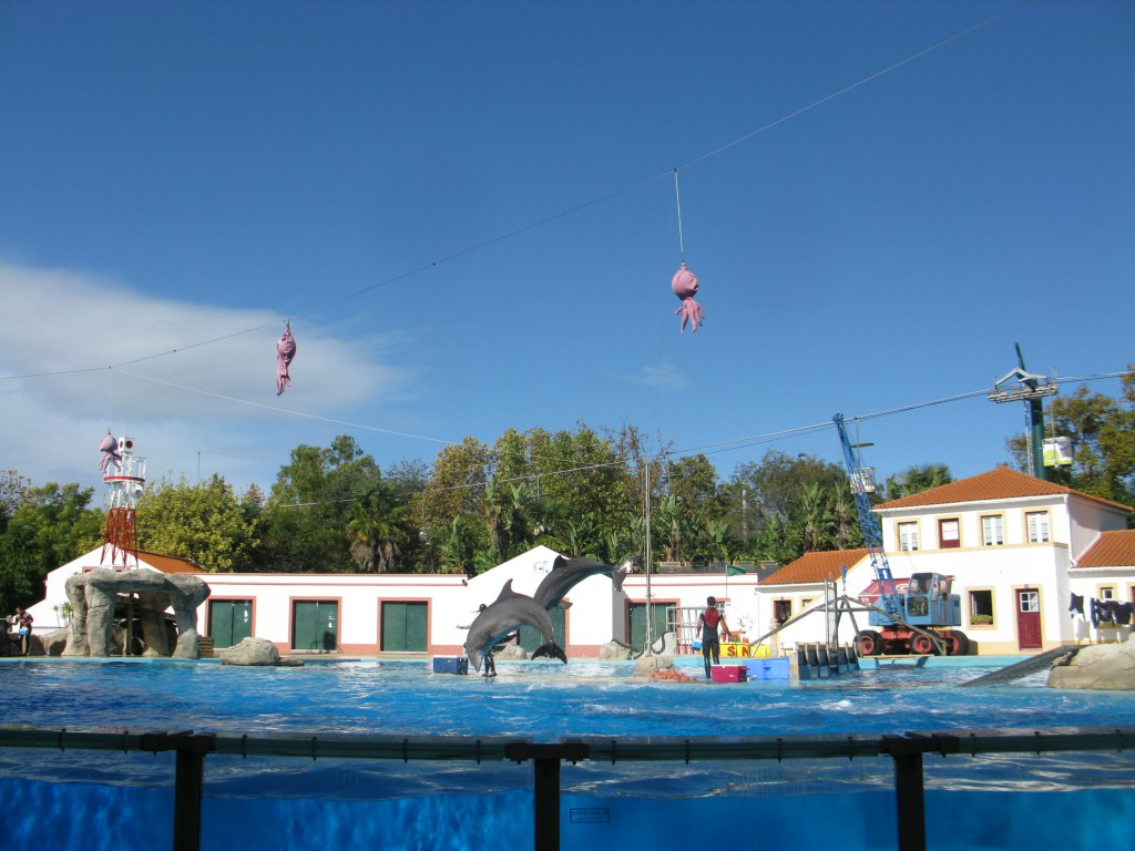 Med delfinshow!