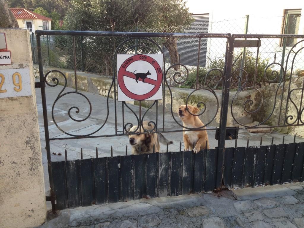 De här två blir som galna varje gång man kommer förbi. Trevligt att man tänkt på att varna katterna tycker vi!