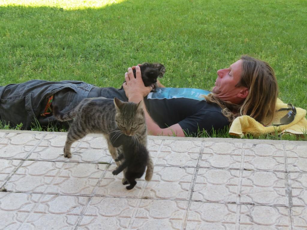 Våra spanska värdar sov siesta ett par tre timmar varje dag. Under tiden roade vi oss med kattungarna i deras trädgård.
