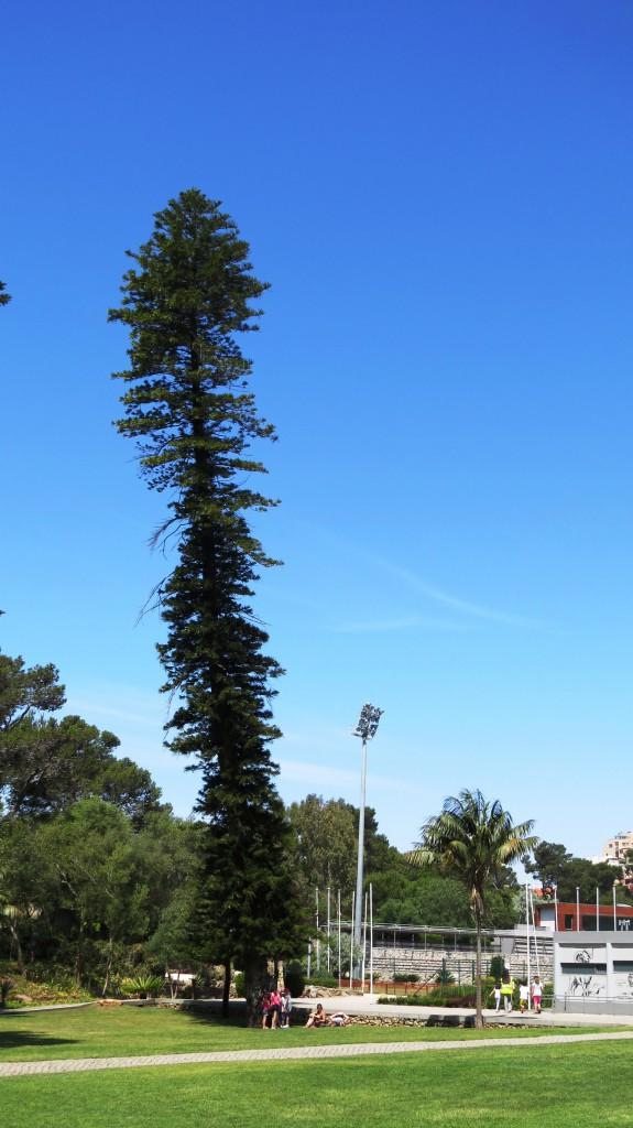 Vad heter trädet?