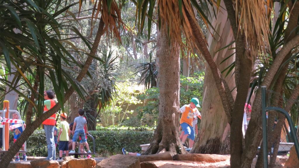 Slönast i skuggan av eucalyptusträden