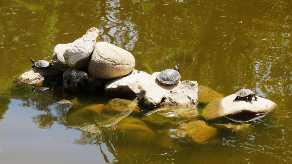 Vad finns det för däggdjur i dammen?