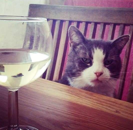 En kopp vinho verde, Frasse?