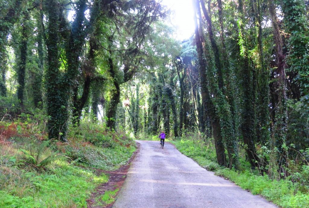 Ute och cyklar i Serra da Sintra