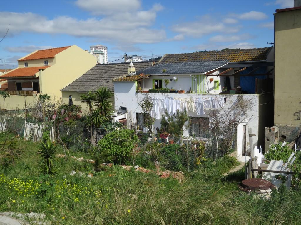 Inte konstigt att många har kålplantor och annat matnyttigt i trädgården.