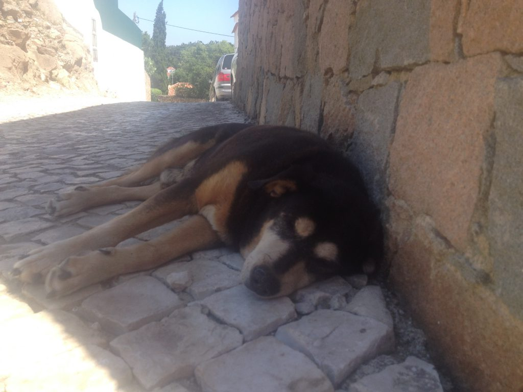 Portugal heter han, men det var inte honom alla hejade på. Han ligger nästan alltid sådär.