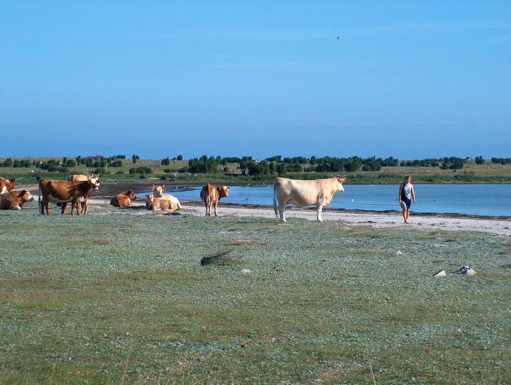 Vi åkte runt och campade på Gotland någon vecka varje sommar i många år.