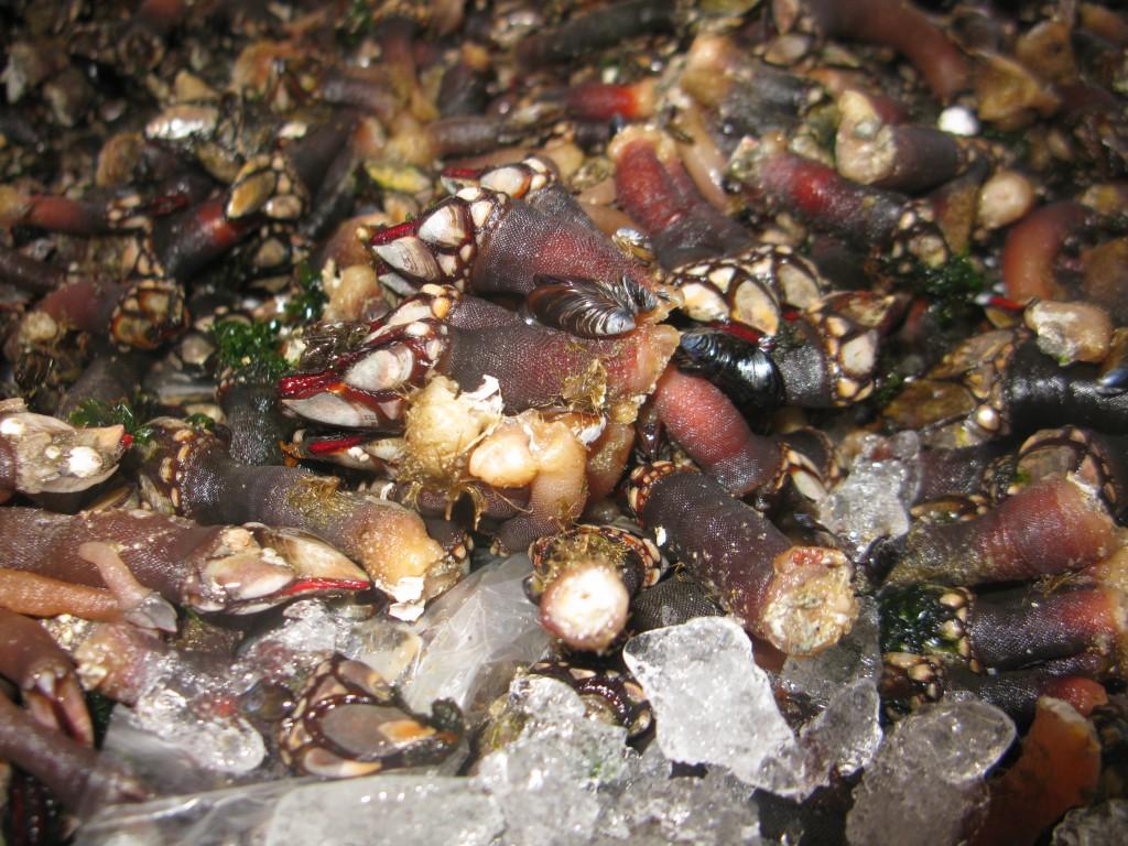 Eller såna här grejer från havet?
