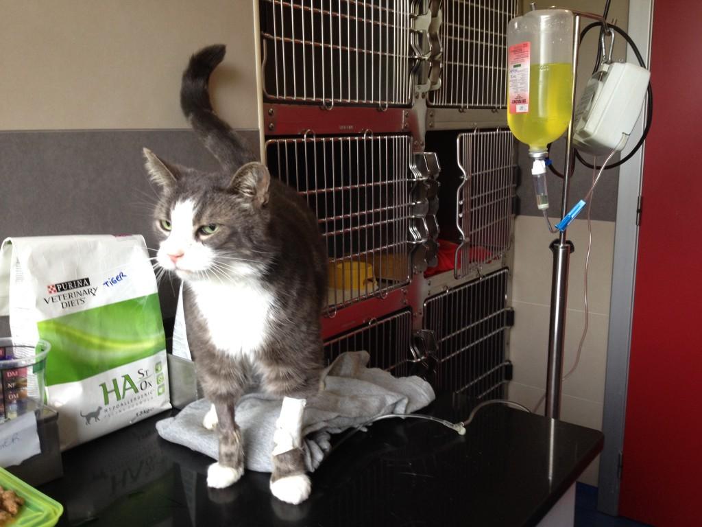 Dessutom hade vi precis hämtat hem Frasse efter tre dagars sjukhusvistelse.