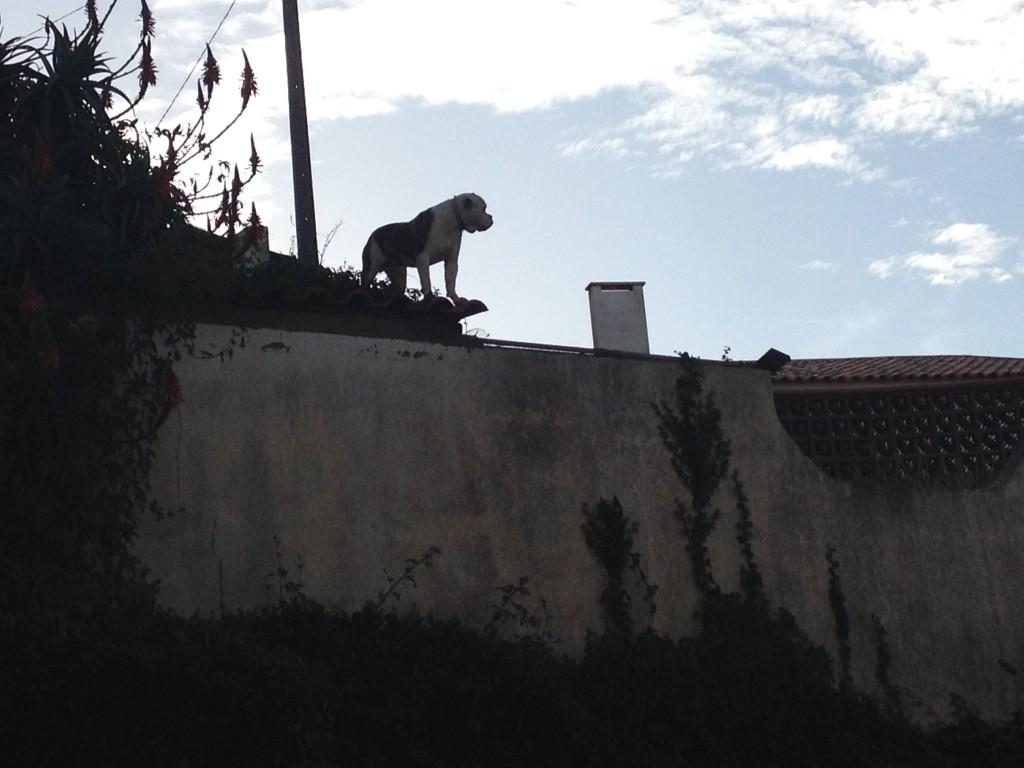 Så. Nu är vid framme vid skolan där en bulldog på taket på andra sidan vägen brukar övervaka morgonrusningen vid skolgrinden. Men han skäller i alla fall inte.