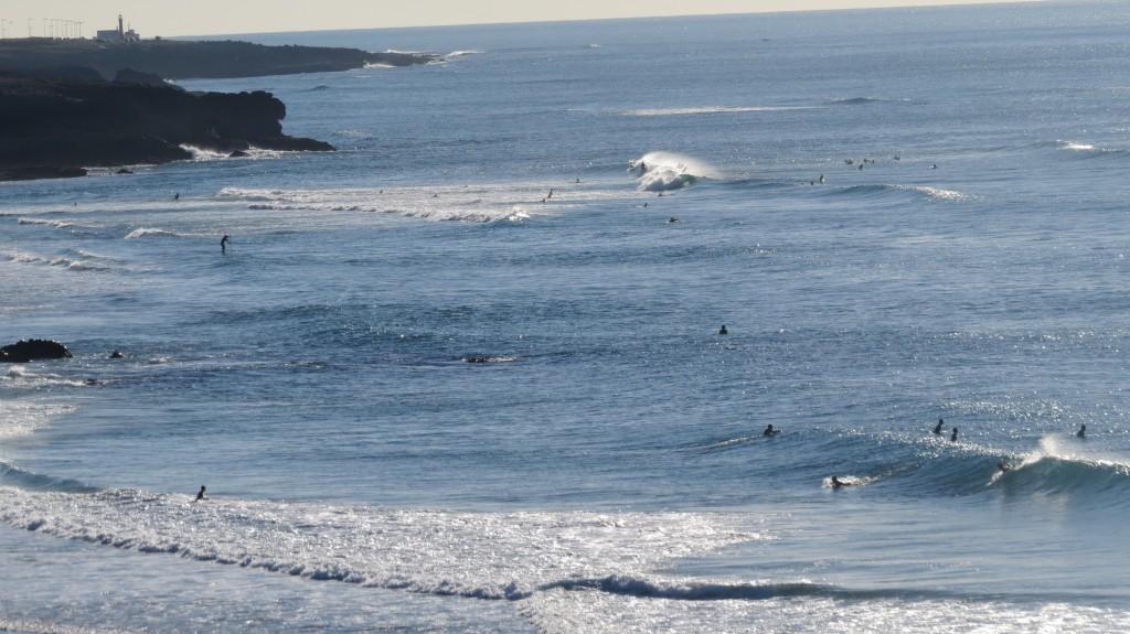 Guincho delfiner 2014 035