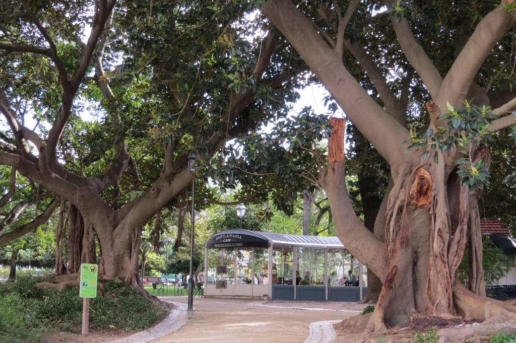 Café/Restaurang i ett orangeri under gigantiska träd i en vacker park. Oas!