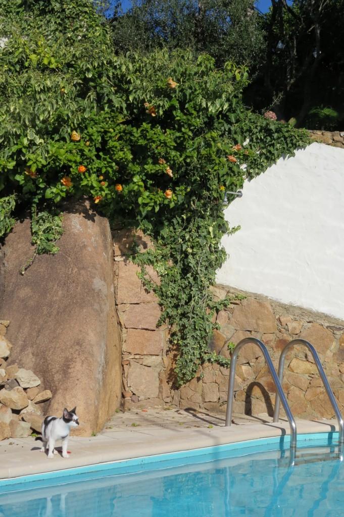 Loppan vid hibiskusbusken vid uteduschen
