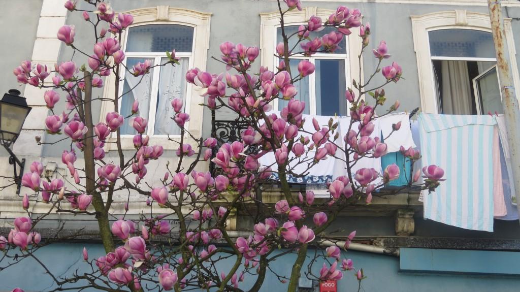 Coimbra mars 2015 002