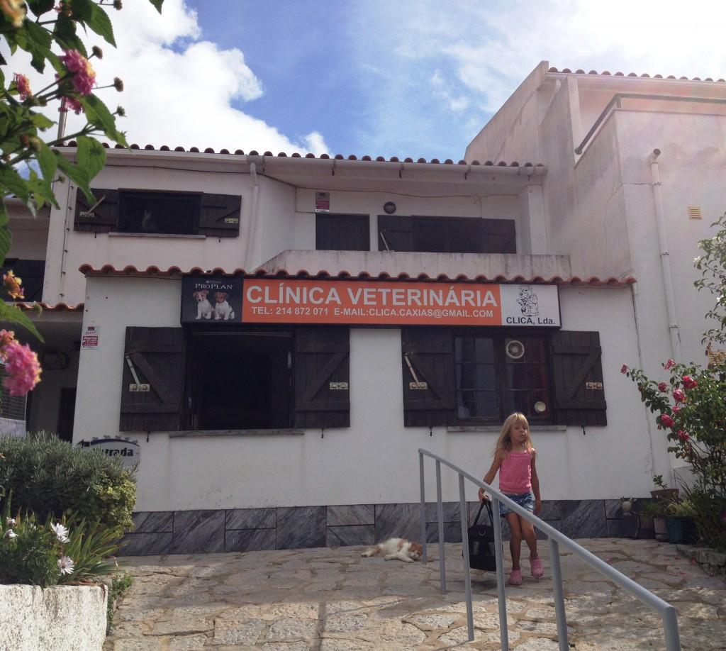 Veterinärkliniken där det bor trettio hittekatter på övervåningen