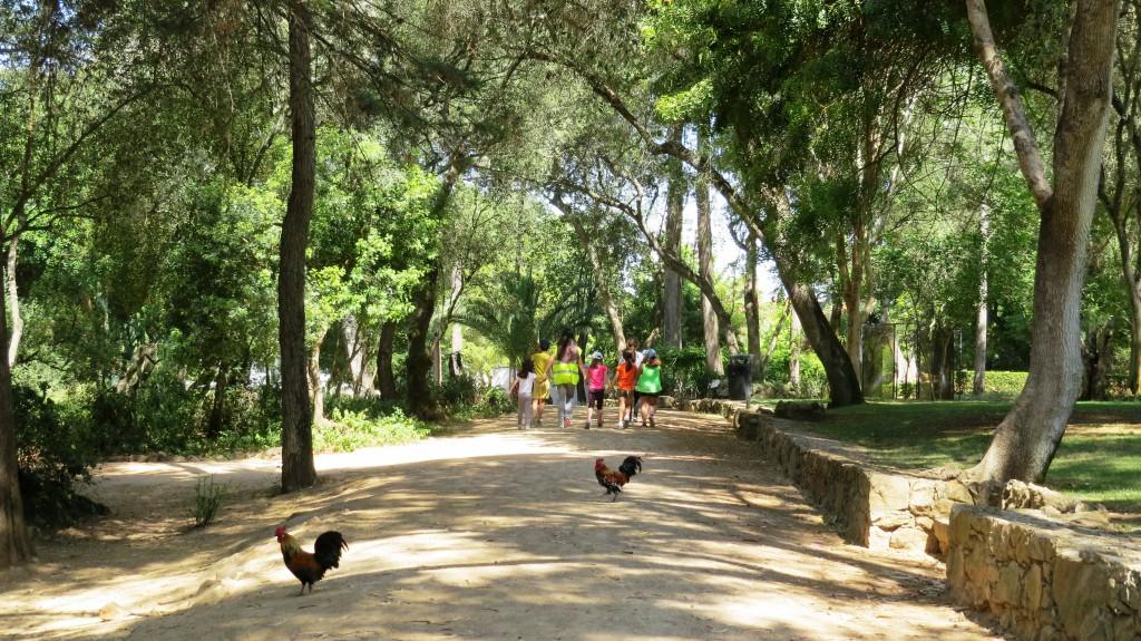 På tipspromenad i den vaclra parken där höns och påfåglar strövar fritt