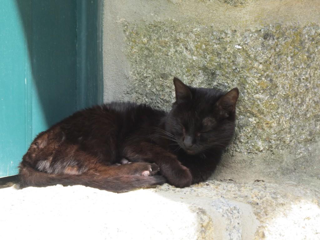 Ingen portugisisk by utan gamlingar och katter !