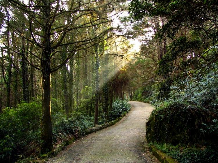 pt-Estrada-de-Sintra-_en-Sintra´s-road-_es-Carretera-de-Sintra-_fr-Route-de-Sintra