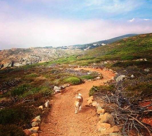 En promenad med hunden kan vara en större upplevelse än det berömda slottet i Sintra.